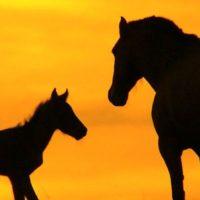 wild-horses-sunset-wallpaper-02