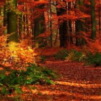 autumn-wood-leaves-trees-red-gleams-2880x1800